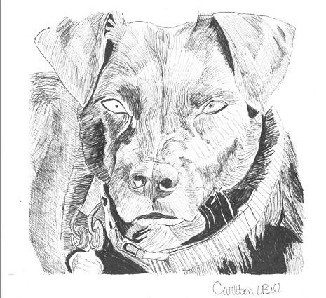 overcoming intimidation semi realistic pen drawing of dog budding